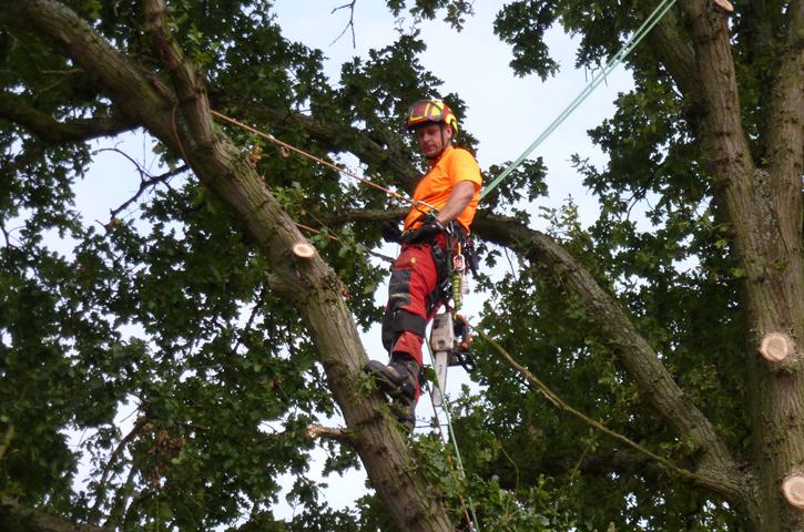 treeclimberv2